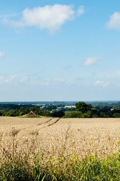 Utsikten från gården är minst sagt vidsträckt; så här såg landskapet ut också för Carl von Linné när han besökte trakten under sin skånska resa 1749.