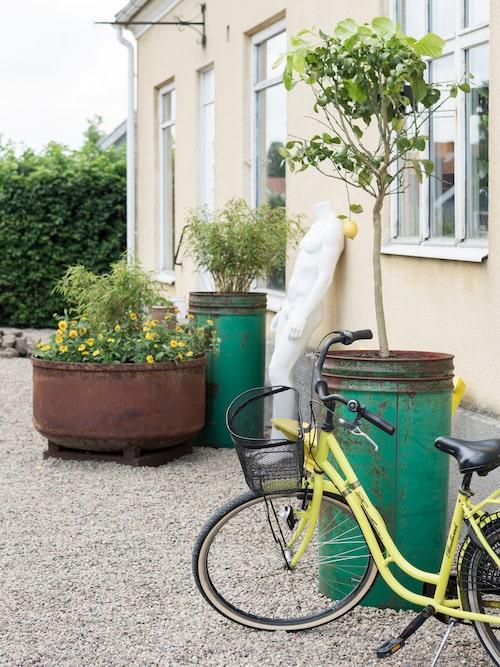 Ute på gården har Simon planterat blommor och träd i gamla vackert slitna tunnor och kärl.