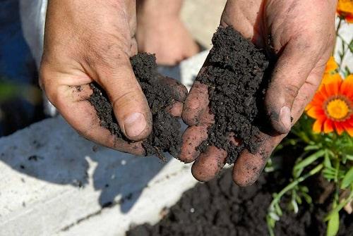 Titta på växterna och analysera jorden. Det märks när det är bra jord.