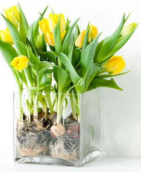 Visa upp lökarna i vasen
