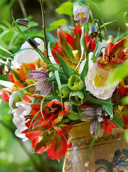 Tulpaner med Fritillaria och Helleborus
