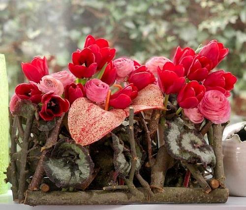 Tulpaner, ranunkler, begonior och kallor