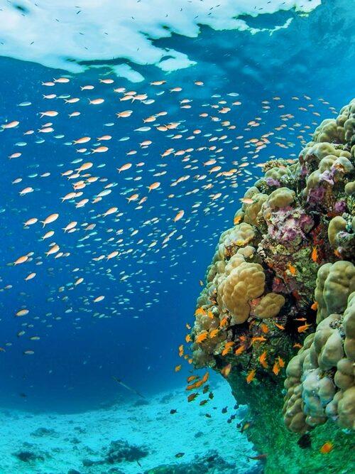 På Zanzibar finns en hel värld att upptäcka under vatten.