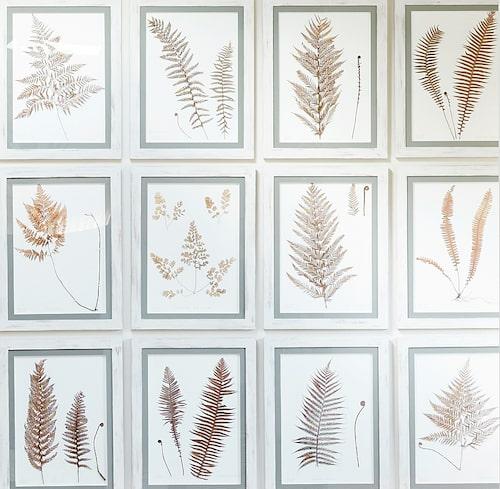 Sätt herbariet på väggen! Här är ramarna och växtfamiljen sammanhållande faktorer.