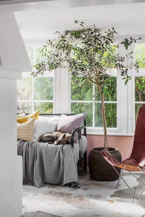 Gästrummet med ingång från båda sidor av den tjusiga öppna spisen, designad av paret självt. Dagbädden används flitigt av hunden Helium när rummet inte bebos av gäster.