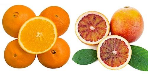 Det finns flera roliga apelsinsorter – till vänster navelapelsin, till höger blodapelsin.