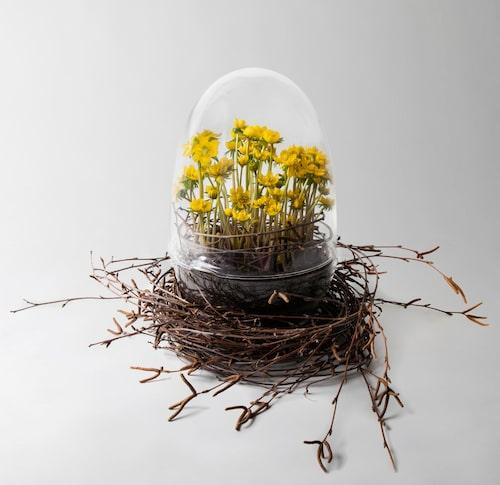 Gör ett fågelbo av björkris och toppa med en odlingskupa och en liten, vacker blomplanta.