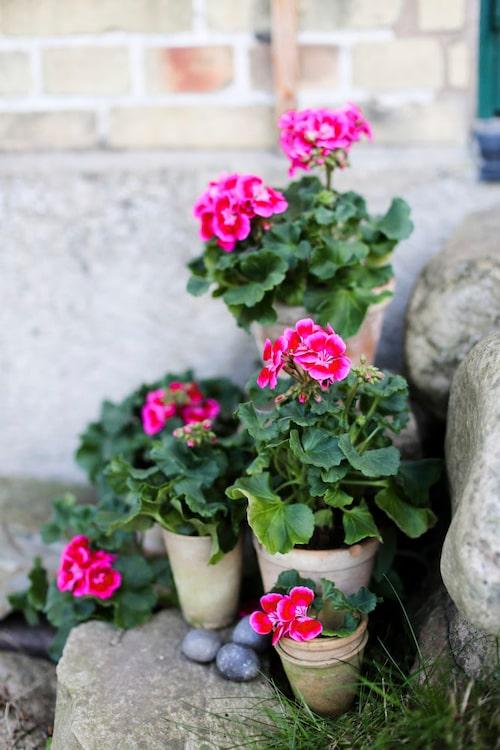 Blomman passar lika fint utomhus, och tål både regn och vind.