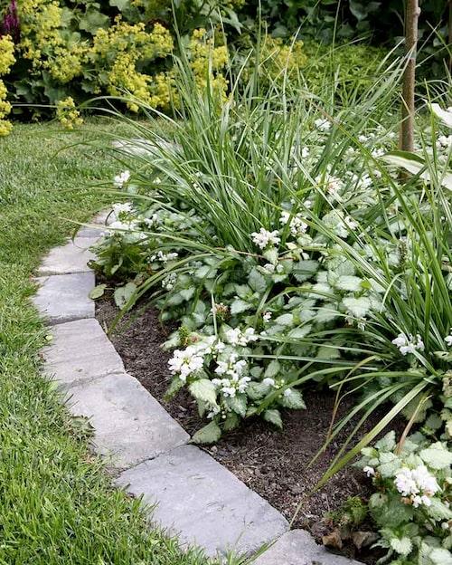 Med en tydlig kant av betongsten blir det lätt att klippa gräsmattan. Snart kommer rosenplister 'Silver Beacon' att välla ut över kanten.