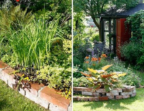 Innanför den låga, värmande tegelmuren växer rabattiris, revsuga med mörka blad, gulblommande penningblad, funkia och jättedaggkåpa.