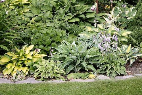 Flata stenar är enkla att lägga, och bildar en praktisk kant för gräsklipparen.