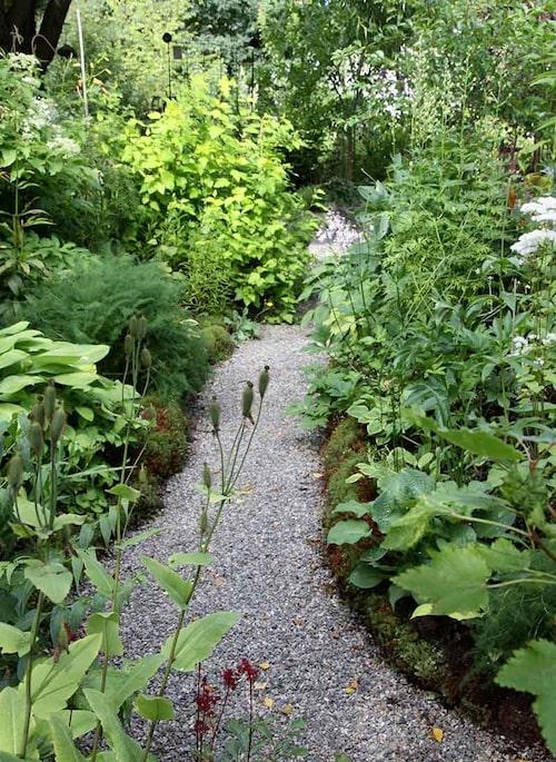 Mossan, som har hittat dit alldeles av sig själv, mjukar upp torvblocken som kantar planteringen.