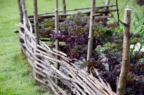 Av sly kan man göra dekorativa kanter runt köksträdgården.