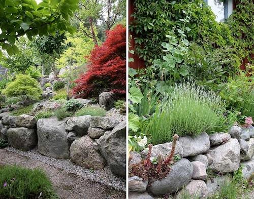 Om trädgården är stenig – se stenarna som en tillgång och använd dem för att terrassera tomten. En upphöjd plantering blir perfekt för alpina växter.