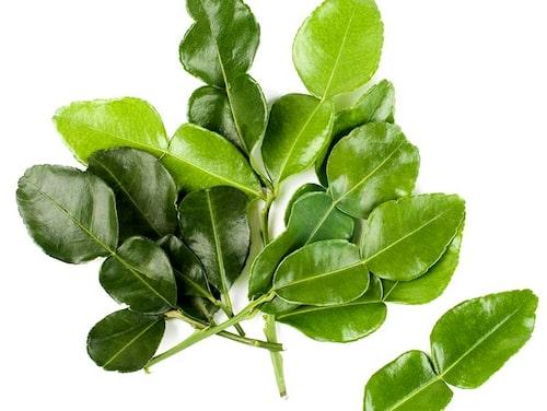 Papeda (alt. kafirlime och limeblad) är de citrusblad som ger smak i matlagning.