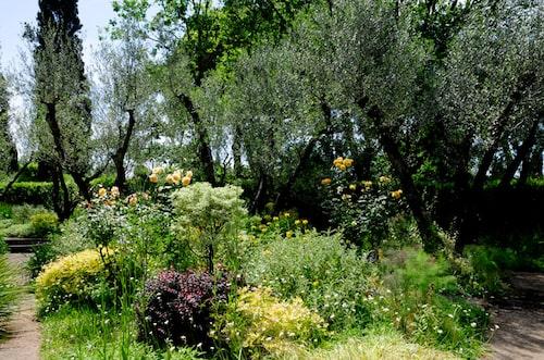 Olivlundar och trädgårdar i Landriana
