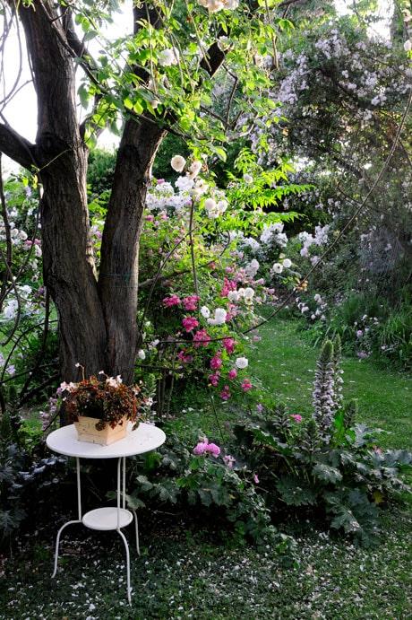 Avkoppling i Simonas trädgård