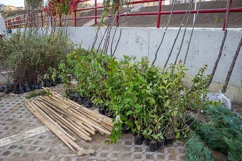 Träd och buskar som ska höstplanteras. Några behöver skyddas från vinterhungriga rådjur och gnagare.