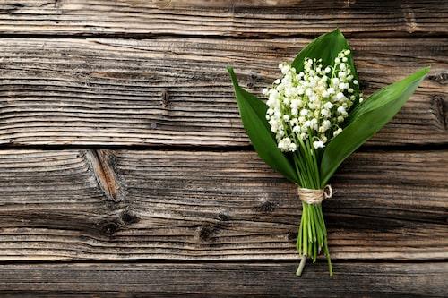 Liljekonvalj är en giftig blomma.