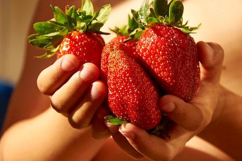 'Maxima' en jordgubbssort med jättestora bär, här i händerna på ett barn.