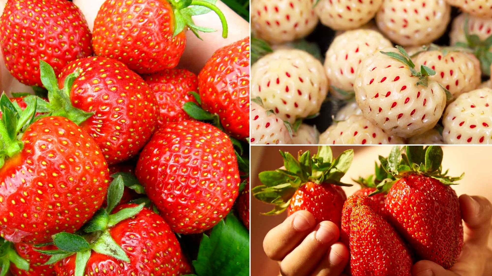 bilder på jordgubbar
