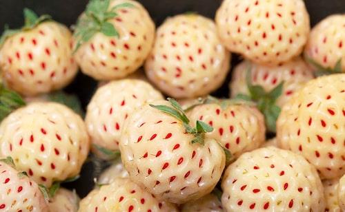 Vita jordgubbar saknar ett protein som göra att överkänsliga kan äta dem. Det finns flera jordgubbssorter som är vita.
