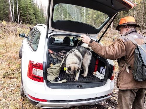 Hundförare Göran Forsbergs unghund trivs i Scoutens bagageutrymme. Älg hittade han dessutom!