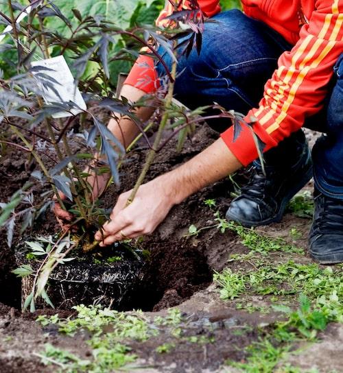 Plantor kräver olika planteringsdjup.