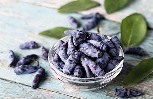 Det finns många olika sorters blåbärstry. Välj gärna flera sorter från samma land, som blommar samtidigt, så att de kan pollinera varandra.