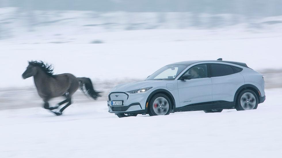 Mustang Mach-E är inte lika terränggående som sin fyrbenta namne, men gör inte bort sig i snön.