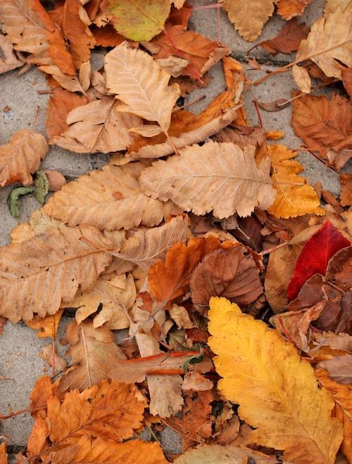 Inte bara vårens och sommarens blommor duger att dekorera hemmet med. Höstens vissnade växter bär på en annan sorts skönhet, väl värd att ta tillvara.
