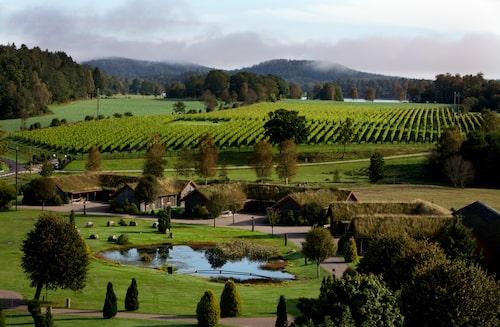 På Ästad vingård i Halland kan du njuta av både högklassigt vin och mat.