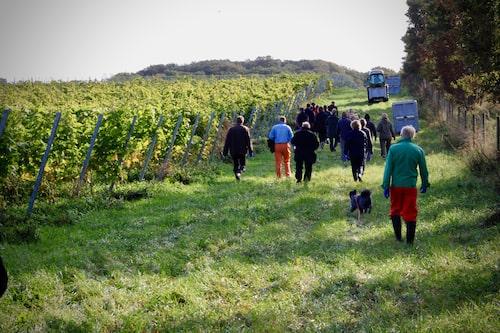 Kullabergs vingård.