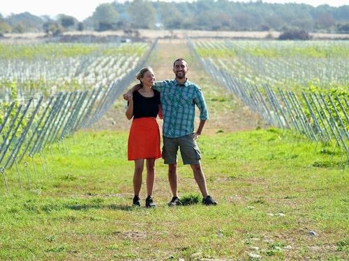 Långmyre vineri på södra Gotland är en ny uppstickare i vinbranschen.