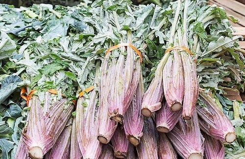 Kardon är inte så vanligt att odla i Sverige idag, men en delikatess i t ex Frankrike.