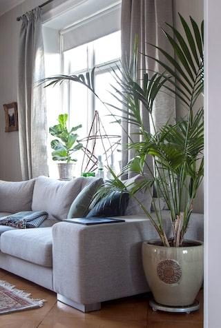 stora växter vardagsrum