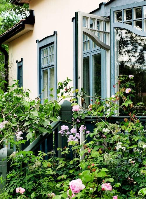 Trädgården är Kerstins stora intresseområde. Austinrosen 'Constance Spry' är en modern buskros som växer generöst runt trappan. Barnbarnet Tuva brukar leka i trädgården och samla rosenblad, berättar Kerstin.