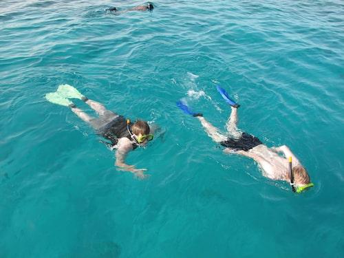 Vi passade på att titta på fiskar i Röda havet.