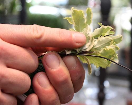 """Börja med ditt första knippe """"bladgrönt"""". Låt själkarna vara 4–5 centimeter långa och vira några varv med tråden runt stjälkarna."""