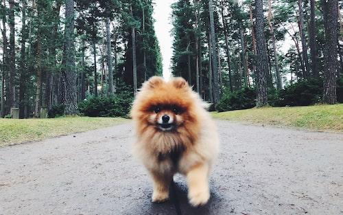 Vicke är adopterad från Hundstallet i Åkeshov. Följ honom på Instagram @vickethewhirlwind!
