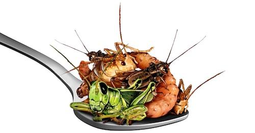Kommer insekter att bli en del av din kostcirkel?