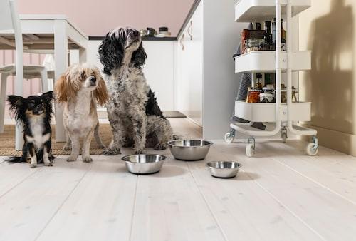 Nya skålar till hundarna? Snälla mot både plånbok och djur.