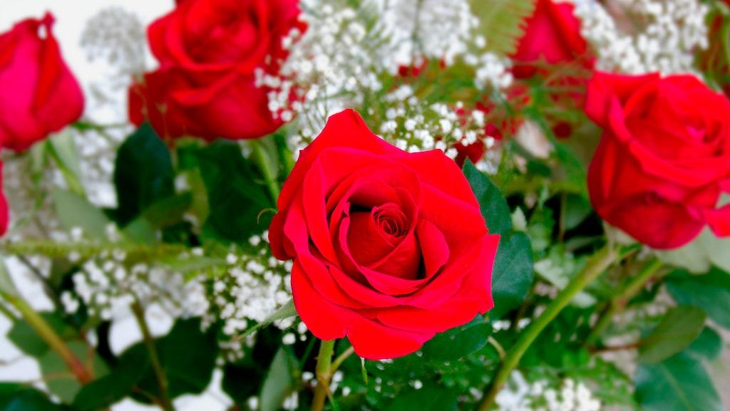 Vill du också att dina rosor ska hålla sig fina längre?