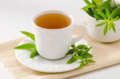 Citronverbena är en kryddväxt med underbar doft och passar utmärkt till örtte.