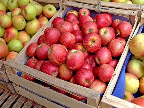Äpplen för allergiker är mer en fråga om vilken äppelallergi man har.