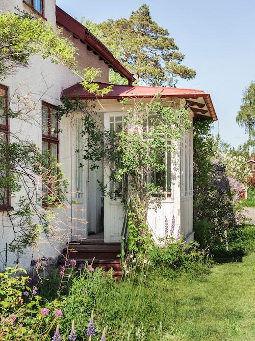 Trädgården var vildvuxen när familjen flyttade in och är så fortfarande. Här växer många gamla sorter som vintergäck och pärlhyacint som kommer på våren, rosor och pioner under sommaren, gullris och aster till hösten.
