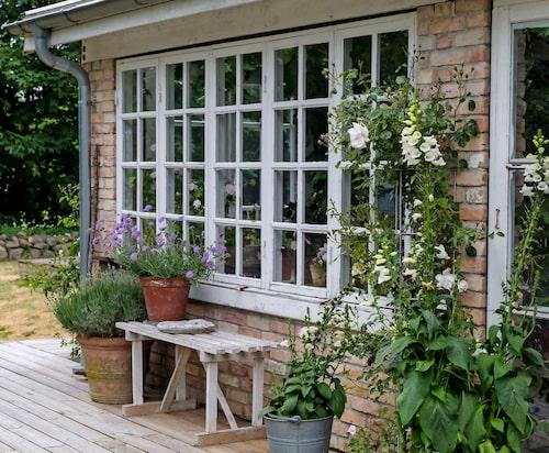 De gamla fönstren med spröjs ger charm och autenticitet, och den nytillkomna träterrassen framför orangeriet ger byggnaden än mer karaktär av sommarhus.