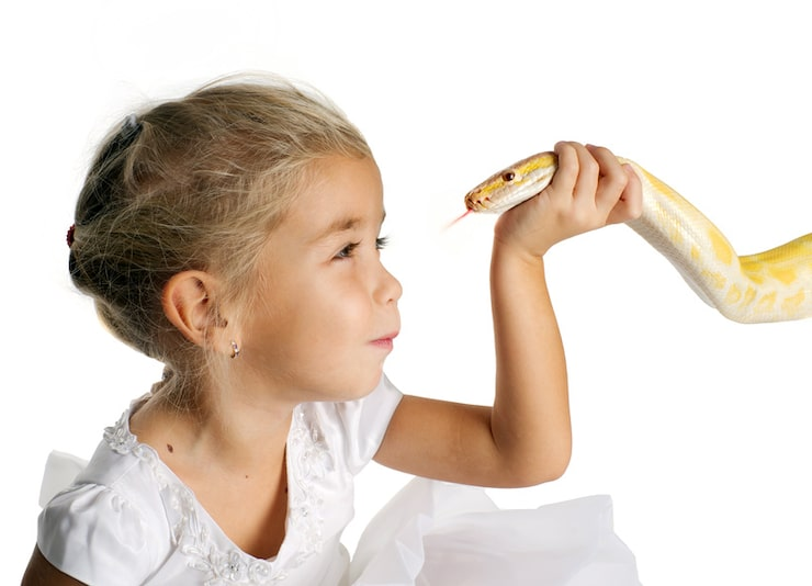The girl with the Python albino on a white background