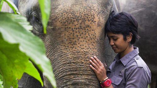 Indonesiens regnskog exploateras för att ge rum åt olagliga palmoljeplantager. Farwiza stärker det lokala samhällets röster och bekämpar palmoljeplantager, bl a i rättssalen. Genom Milkywire får hon stöd från privata donatorer.