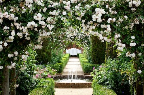 Trädgårdsresa till England – kända rosenträdgården Mottisfont Abbey.